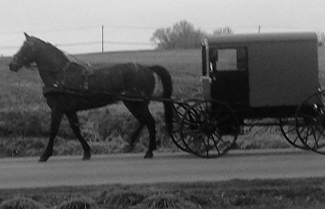 Horse and Buggy.jpg
